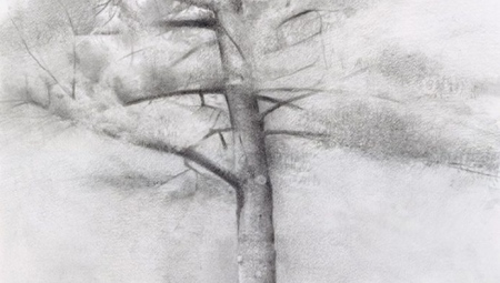 Study for Big Pine, 2006 Charcoal & graphite on paper, 22 x 15 in.